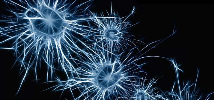 Neurons - Image from www.pixabay.com